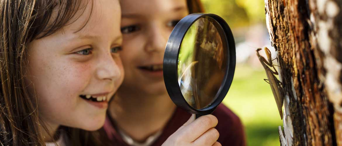 two children using a magnifying glass to look at a mantis on a tree