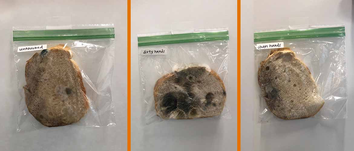 From left to right, a piece of bread in a bag labeled dirty hands from day three and a piece of bread with some mold growing on it labeled dirty hands form day 10.