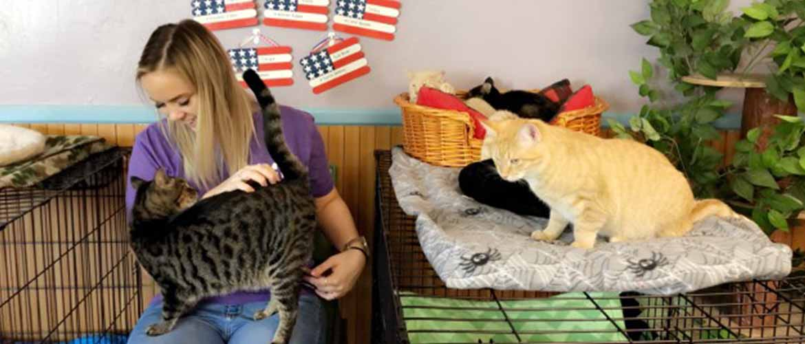 a MedExpress employee petting a cat while volunteering at Nose 2 Tail Cat Rescue
