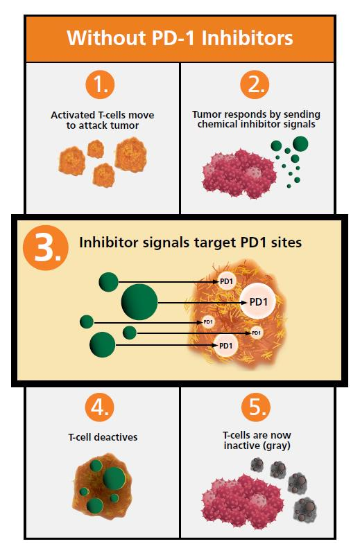 Infographic illustrating the five-step process for what happens without PD-1 inhibitors