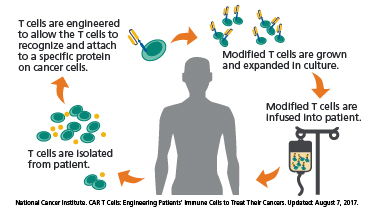 Graphic of how T cells attach to specific protein on cancer cells