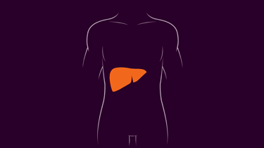 diagram of body with liver highlighted in red